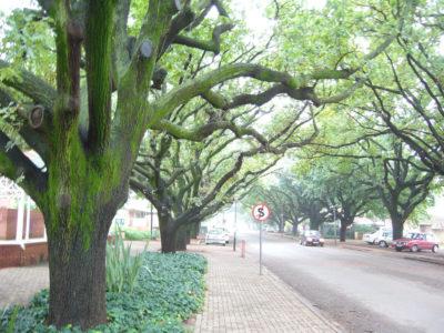 big trees next to street